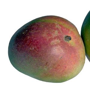 receta copa yogur mango moras
